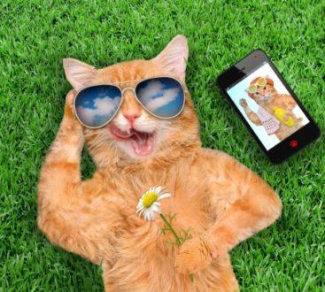 গ্রীষ্মে বিড়ালের যত্ন( Cat care in summer)